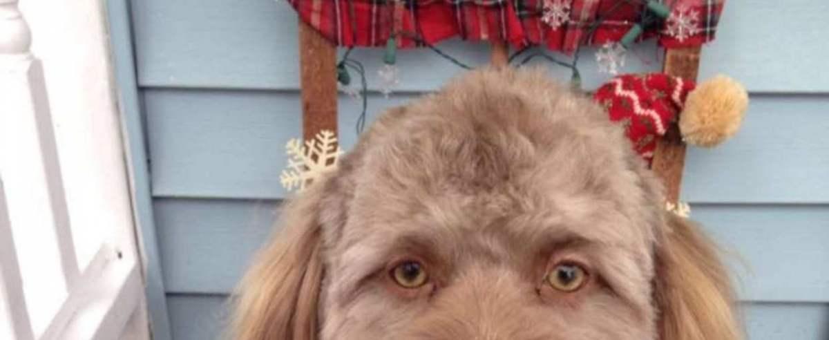 pies z ludzką twarzą