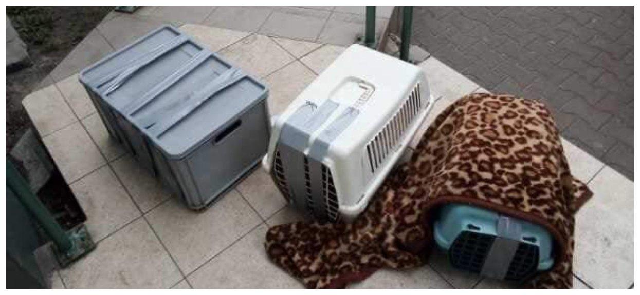 Koty porzucone w transporterach