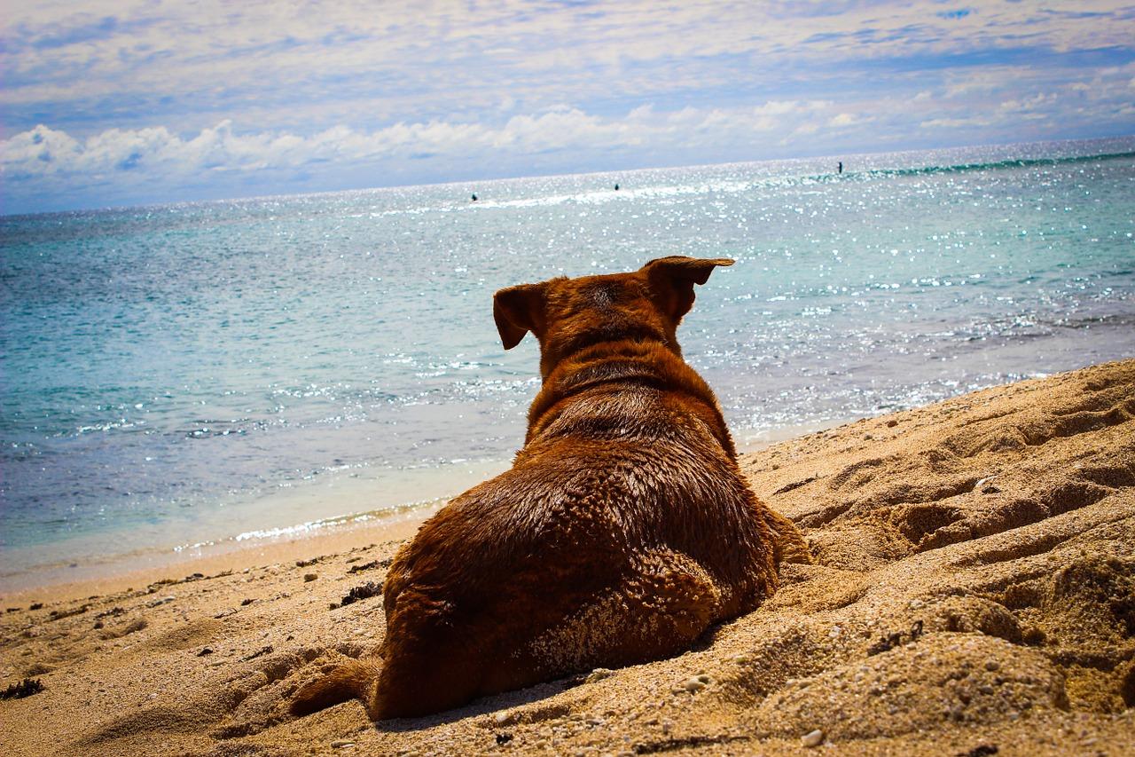Australijskie rasy psów – jakie znamy?