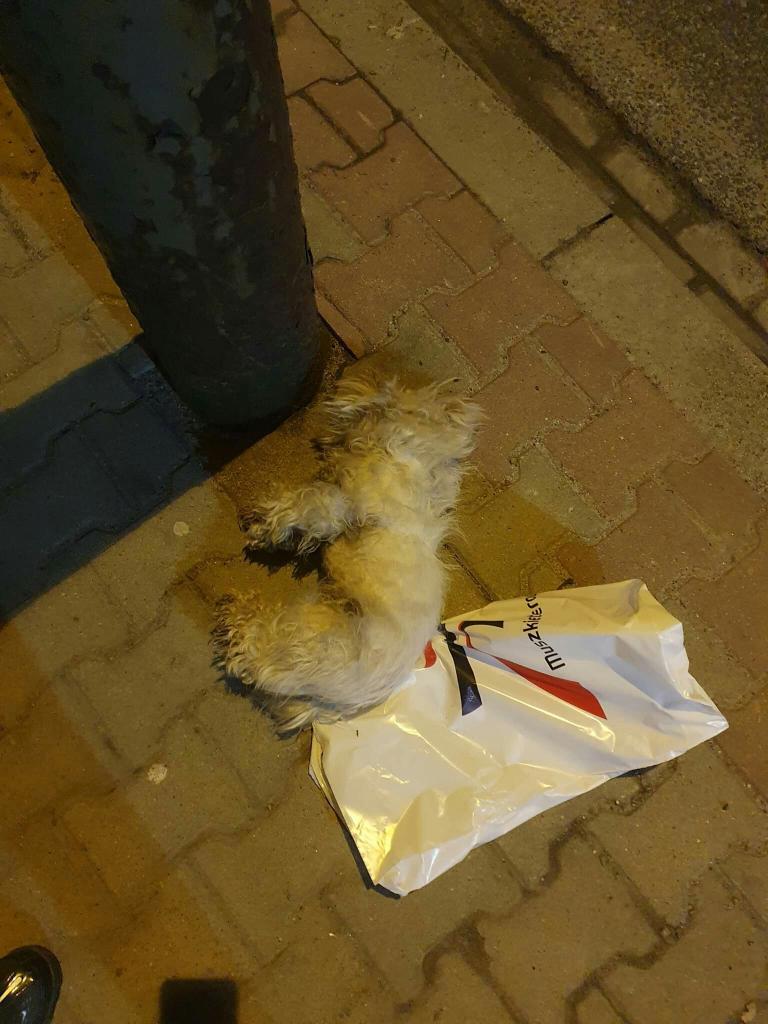 Pies porzucony w worku