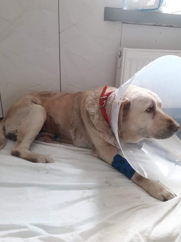 Rita po operacji