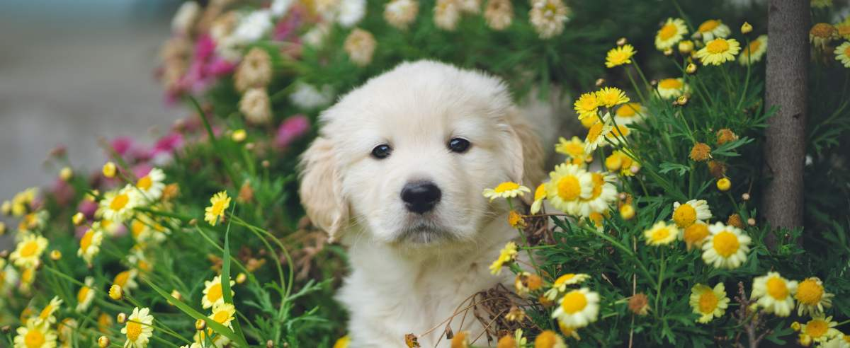 Zdjęcie podglądowe  - pies