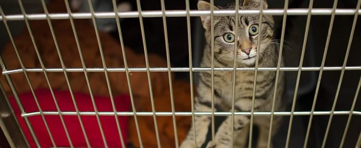 Białaczka u kota (FeLV) – jakie są objawy i jakie leczenie podjąć?