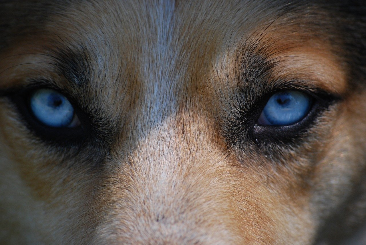 Jakie są najczęstsze choroby oczu u psów? Jak je leczyć?