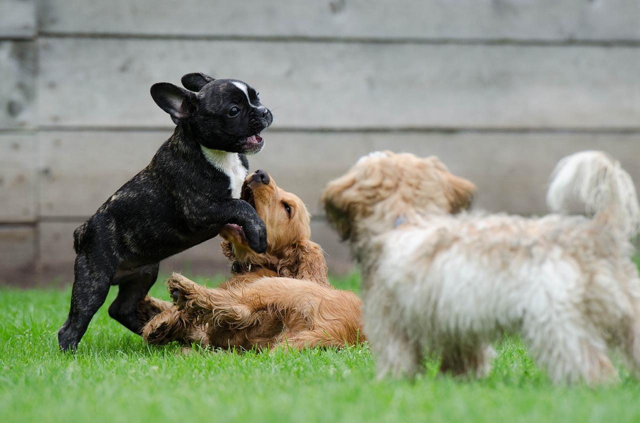Przedszkole dla psów – wszystko co musisz o nim wiedzieć