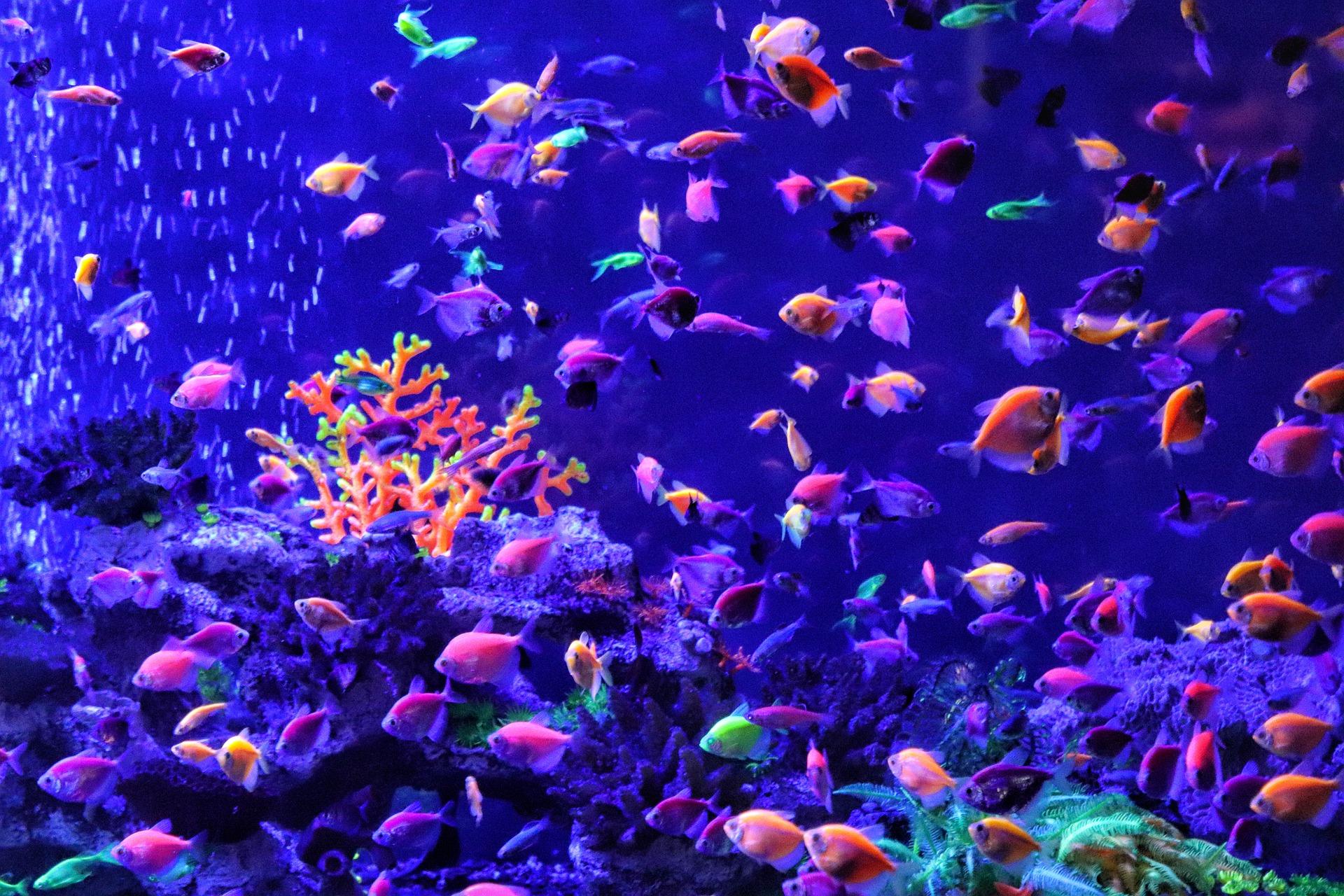 Ryby akwariowe: podwodny świat w Twoim domu