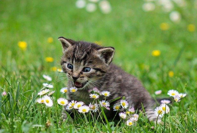 Alergia na koty – jak sobie z nią poradzić?