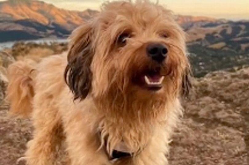 Pies przed fryzjerem