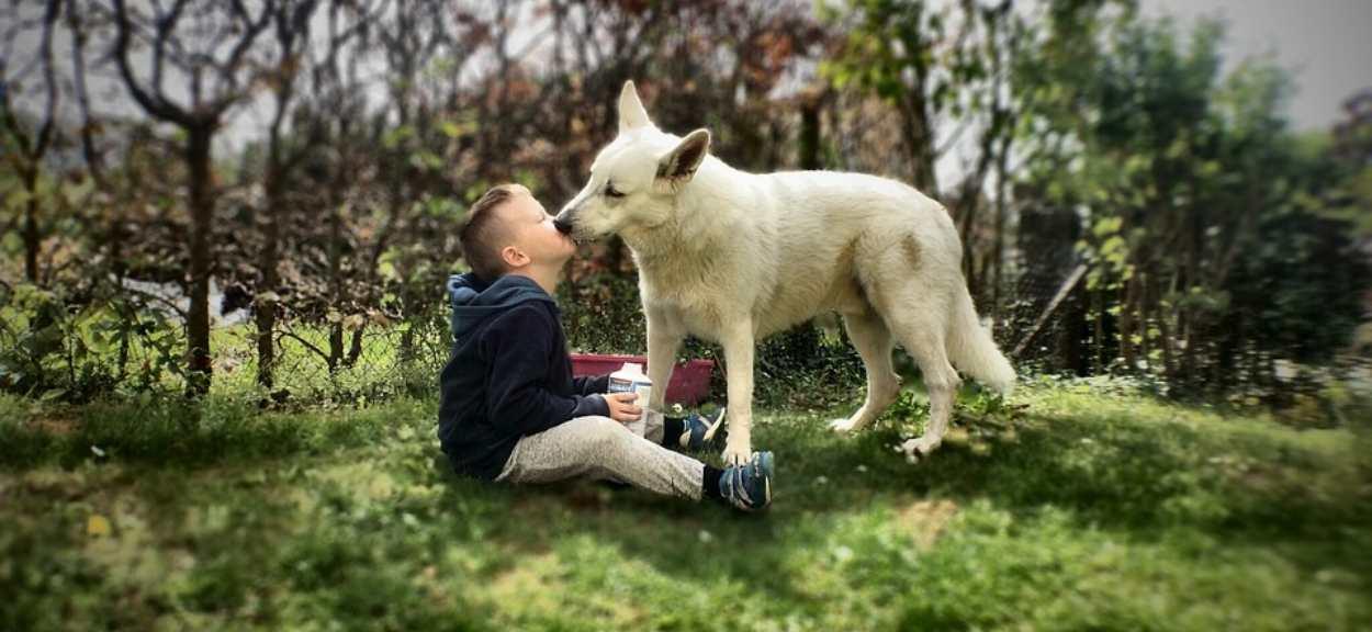 pies liże dziecko