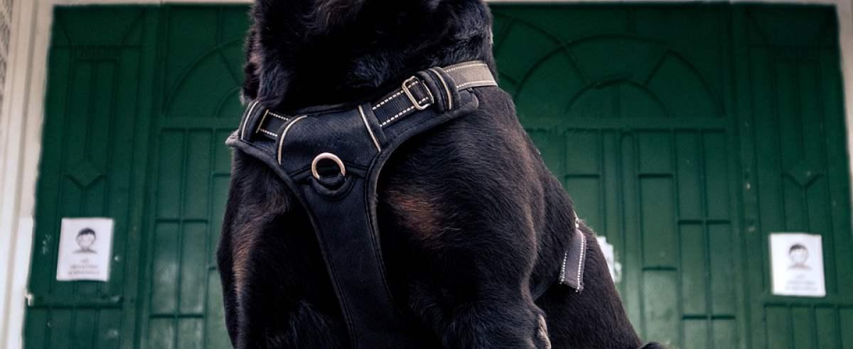 UWAGA – zły pies, czyli psy stróżujące