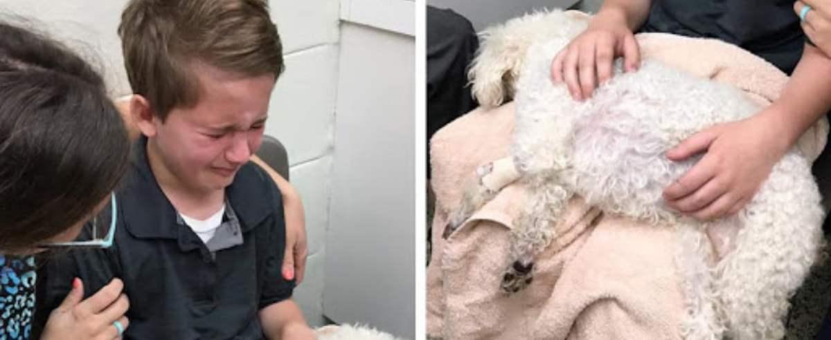 Chłopczyk pożegnał ukochanego psa