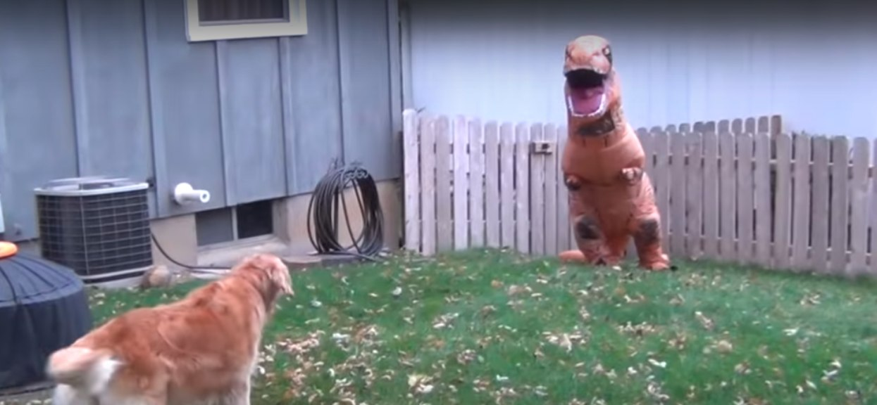 pies i dinozaur