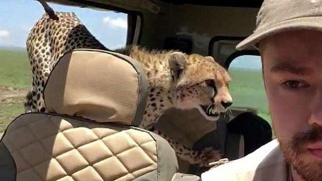 Gepard w jeepie