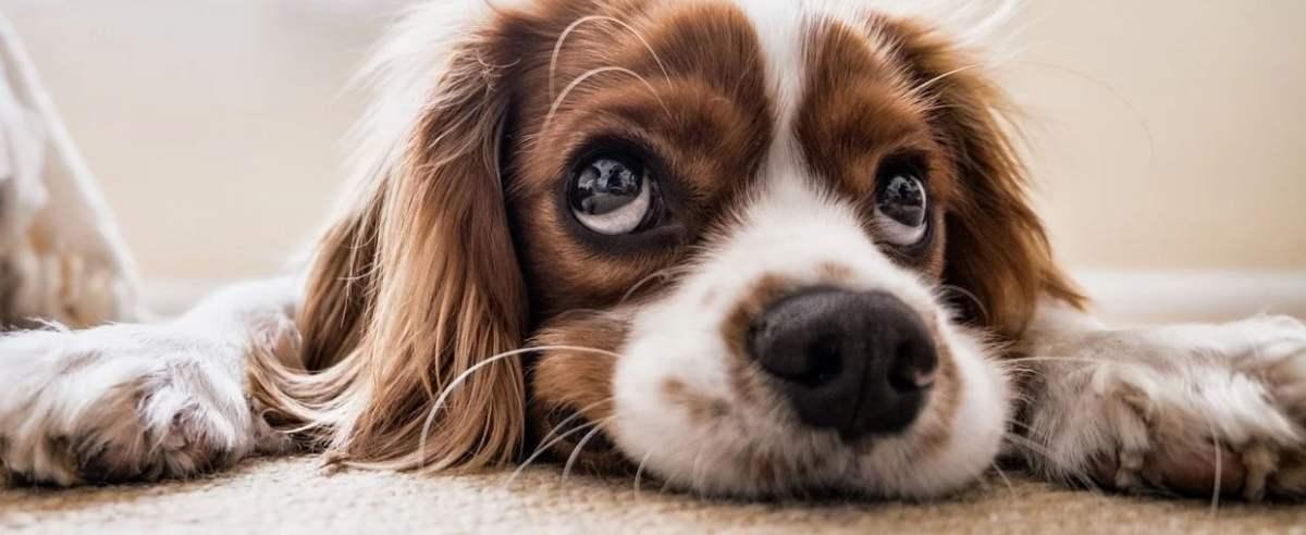 Pies bywa niegrzeczny?
