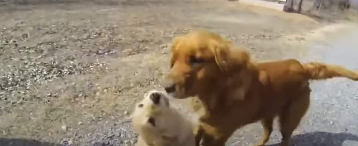 szczeniak z matką
