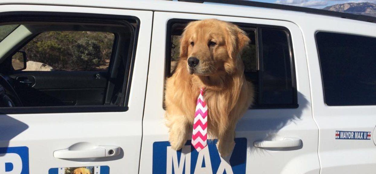 Max w samochodzie