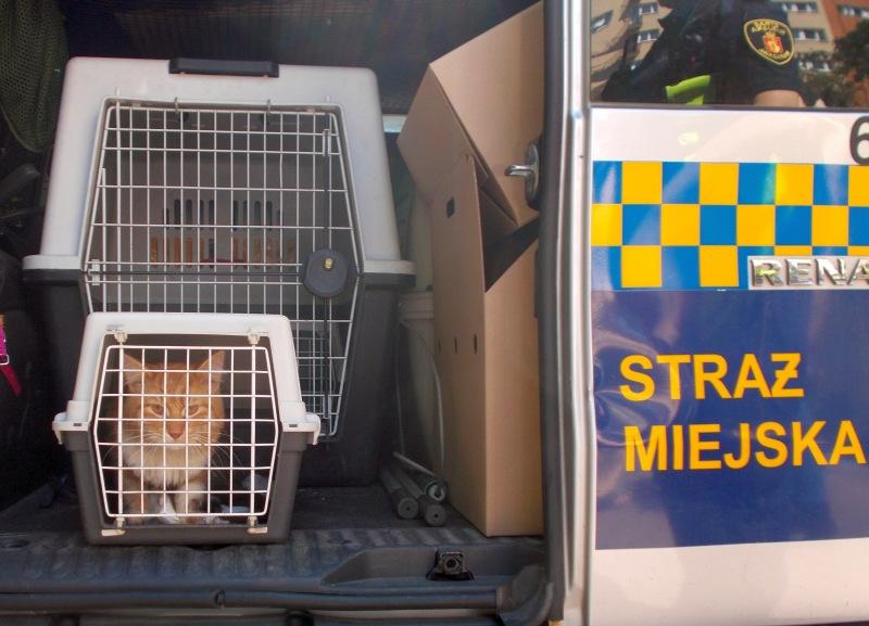 Uratowany kotek