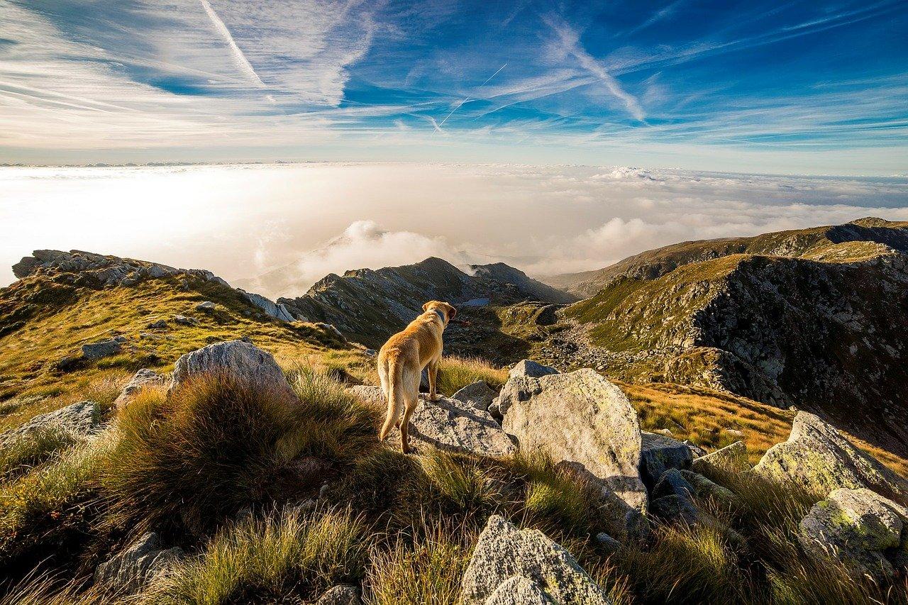 Czarnogórski gończy górski – tajemniczy pies z Bałkan