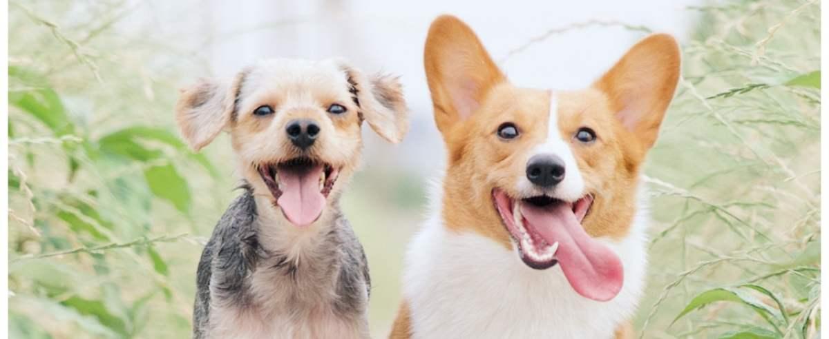 Zdjęcie podglądowe  - psy