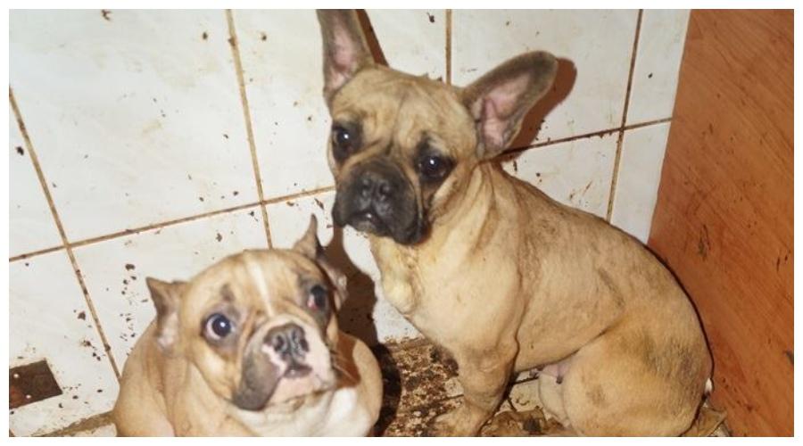 Psy uratowane z pseudohodowli