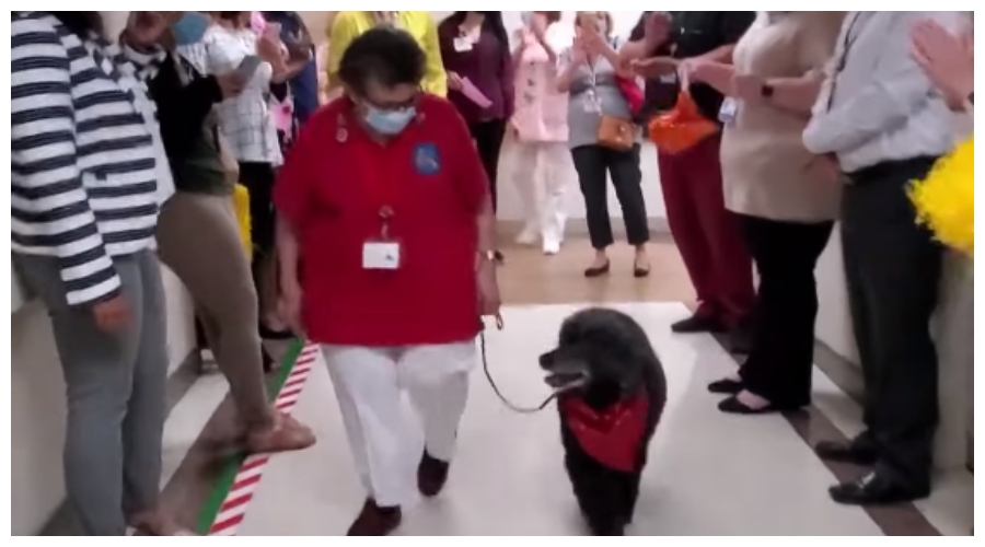 Pożegnanie psa