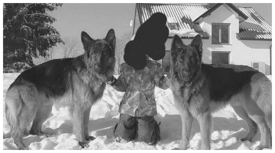 facebook/Wolontariusze dla bezdomnych zwierząt - Kołobrzeg, fot. Barbara Patruś