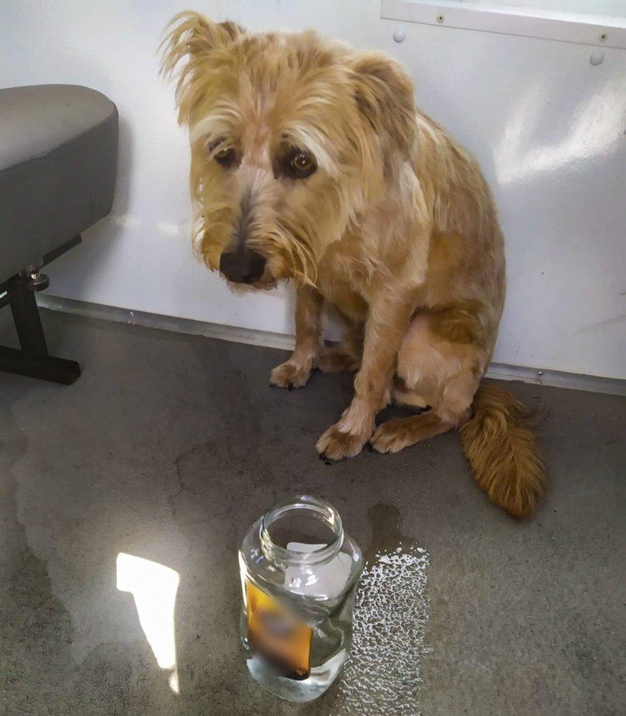 Pies uratowany z nagrzanego samochodu