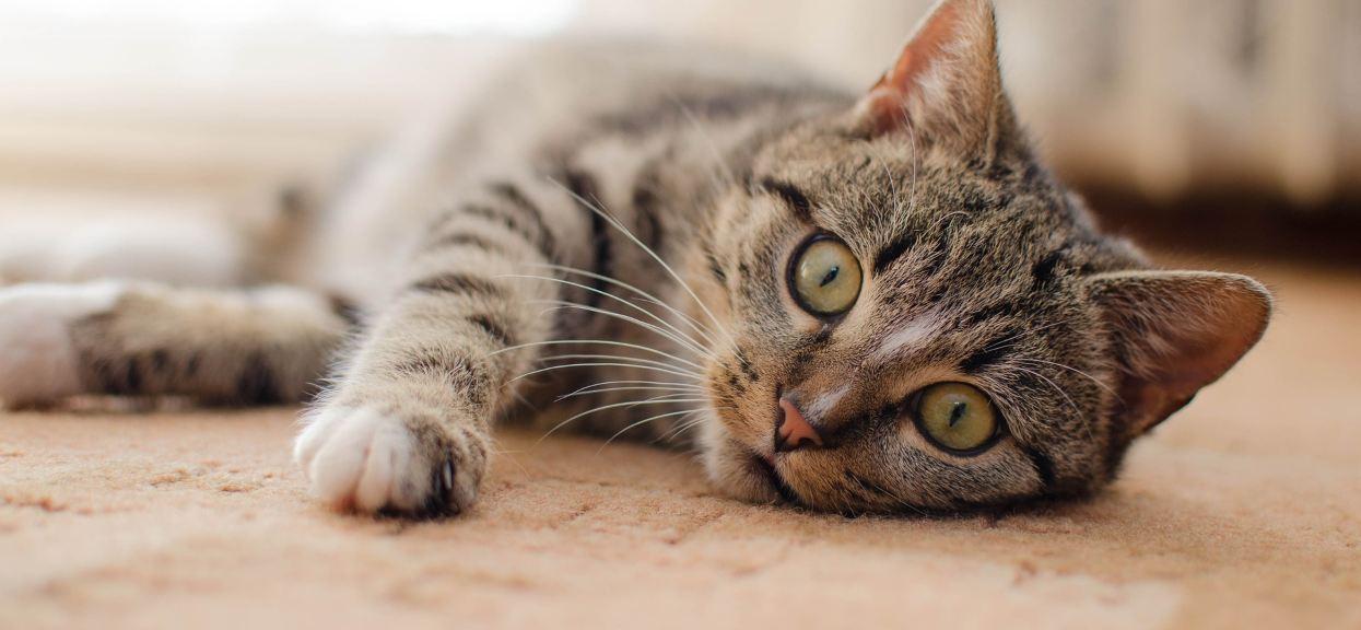 Ile kot ma żyć