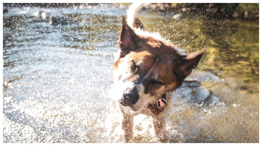 Pies nad jeziorem
