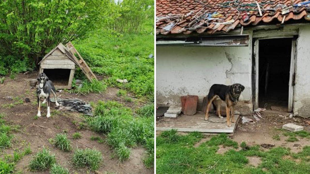 Psy pozostawione na posesji