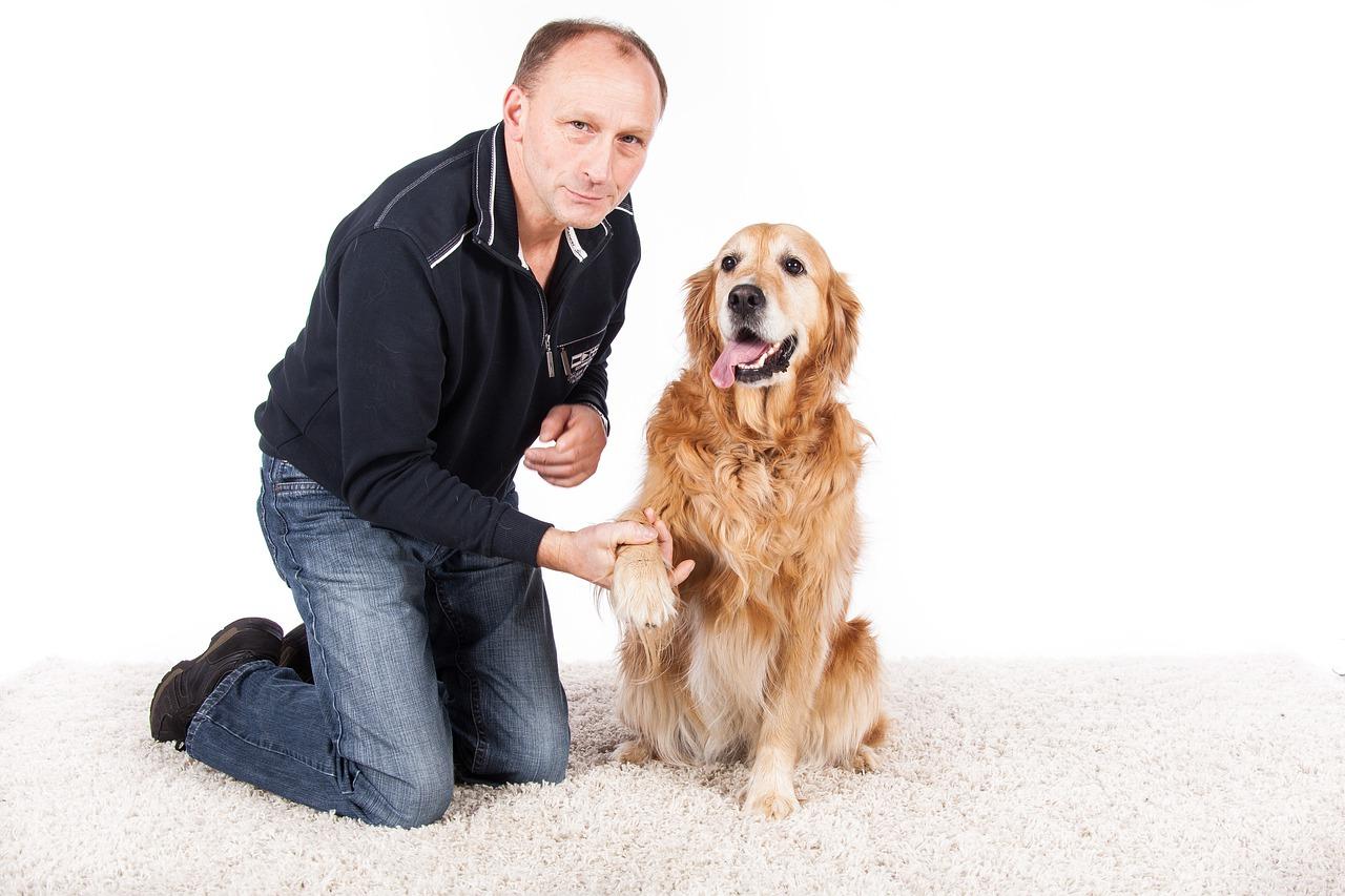 Trening psa: przychodzenie na zawołanie