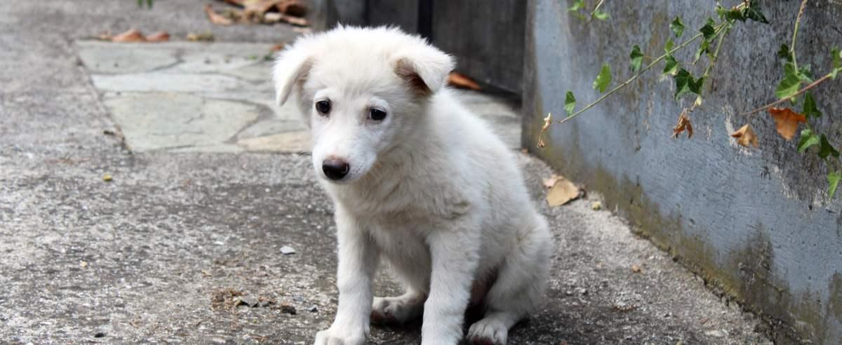 Zdjęcie podglądowe  - bezdomny pies