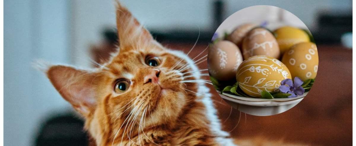 Kot w Wielkanoc