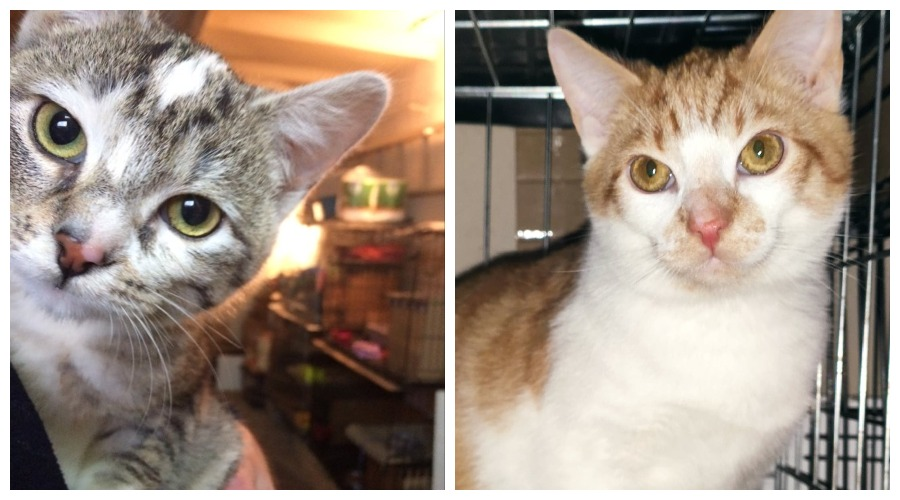 Kotki do adopcji
