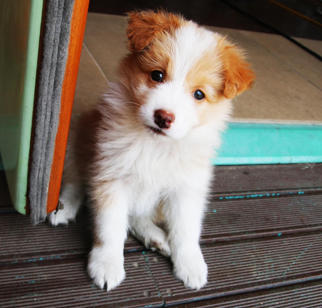 Hotel dla psów – jaki jest koszt pobytu psiaka?