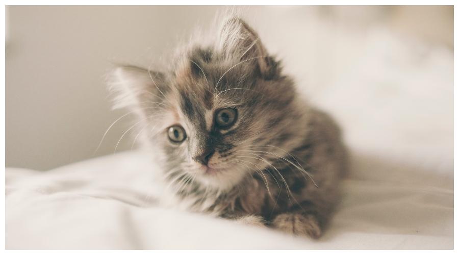 Zdjęcie ilustracyjne: kot