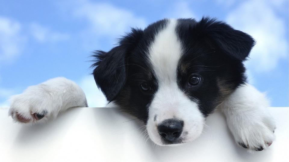 pies na tle nieba
