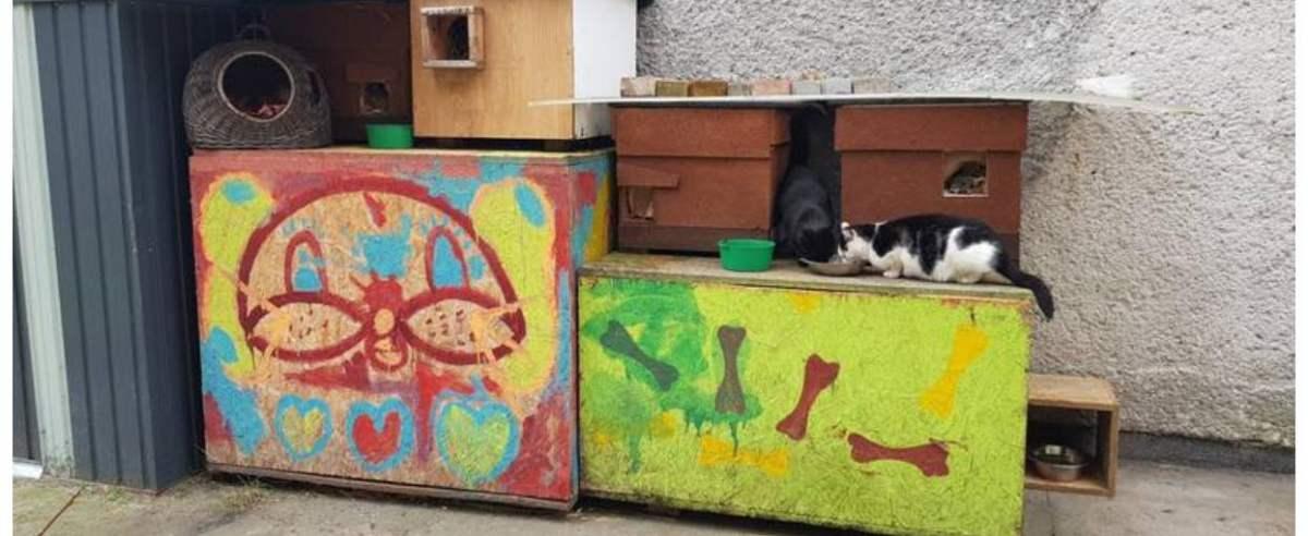 Przytulisko bezdomnych zwierząt w Zaborze