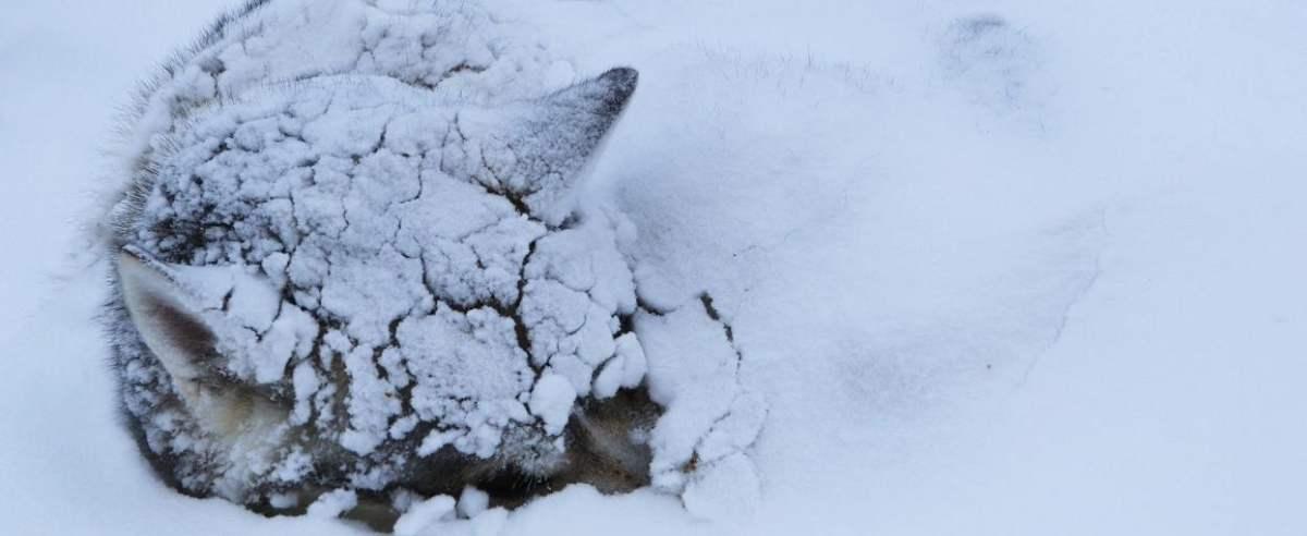 pies w śniegu