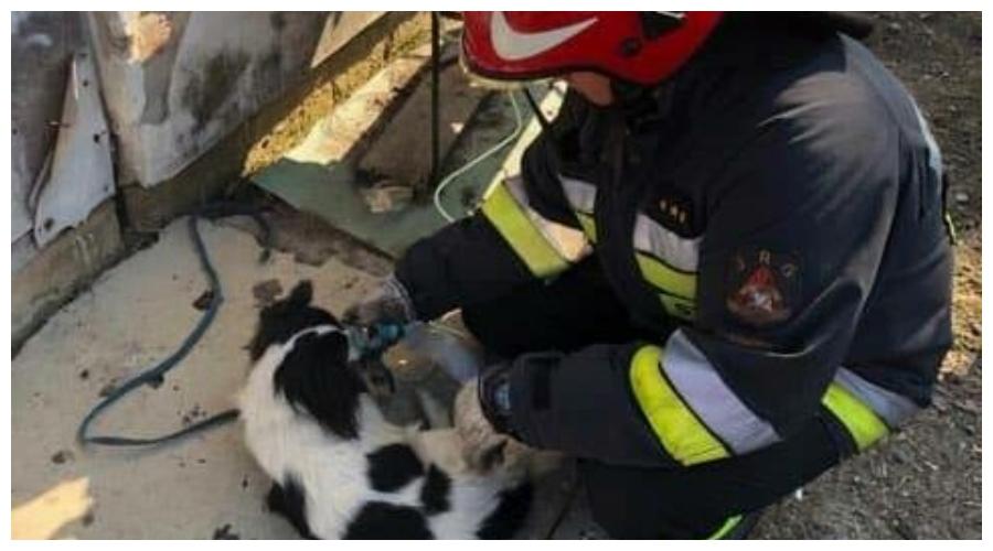Akcja ratownicza psa