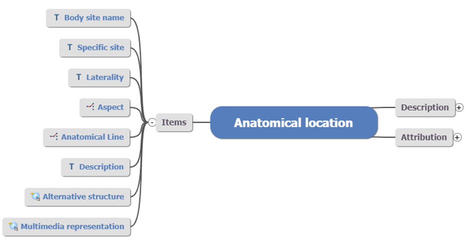 anatomical location archetype