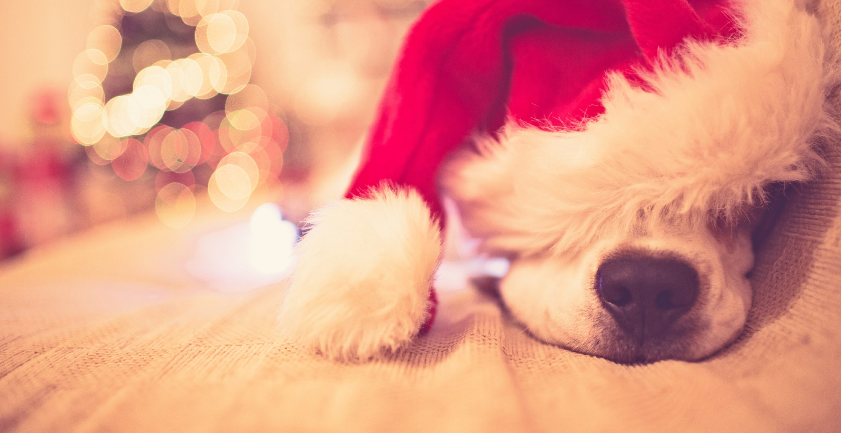 6 ways to keep your pets safe over christmas
