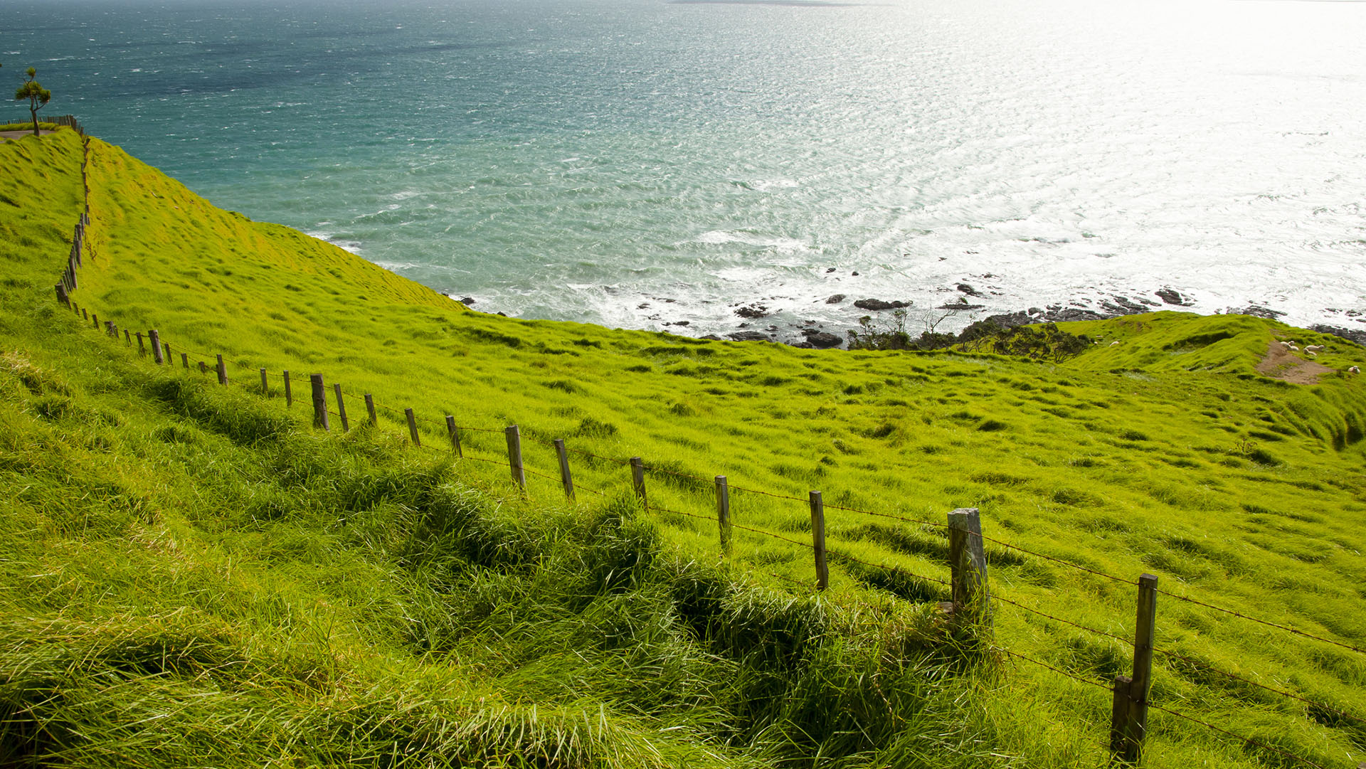 Sheep Pasture - Port Jackson - New Zealand