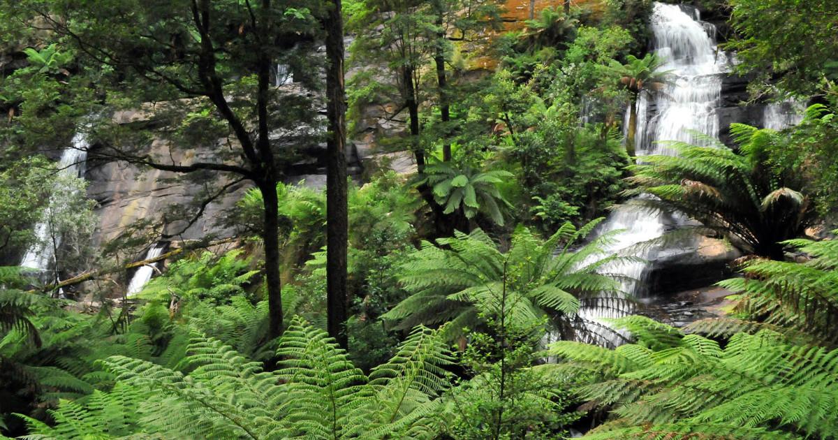 Tasmanian Hikes Blog: July 2011 |Hiking Australia