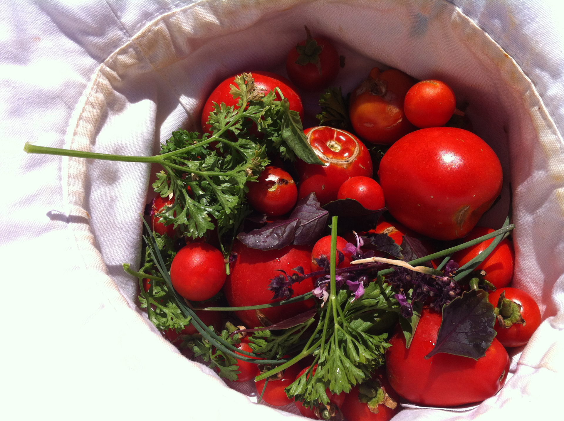 wiluna_12_We-used-the-tomatoes,-with-fresh-parsley-and-basil-to-make-a-tomato-salad.