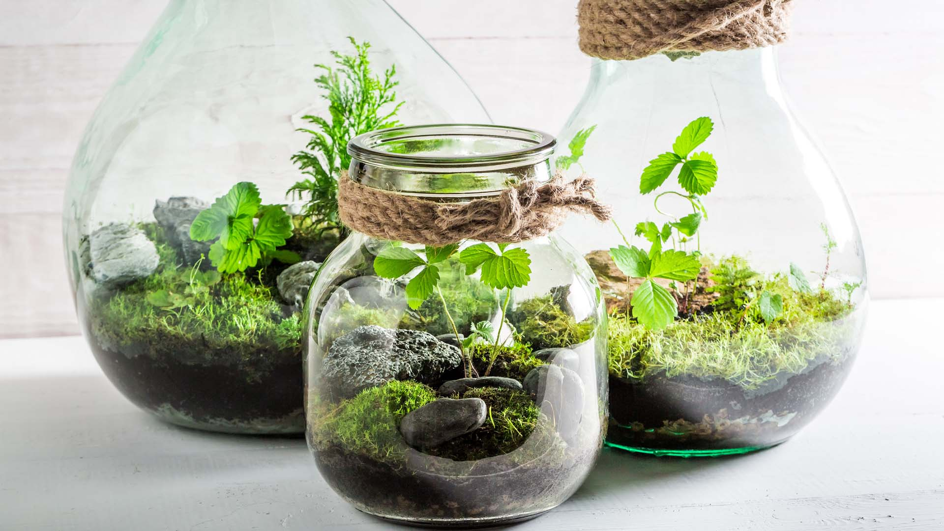 How To Make Mini Terrariums Live Better