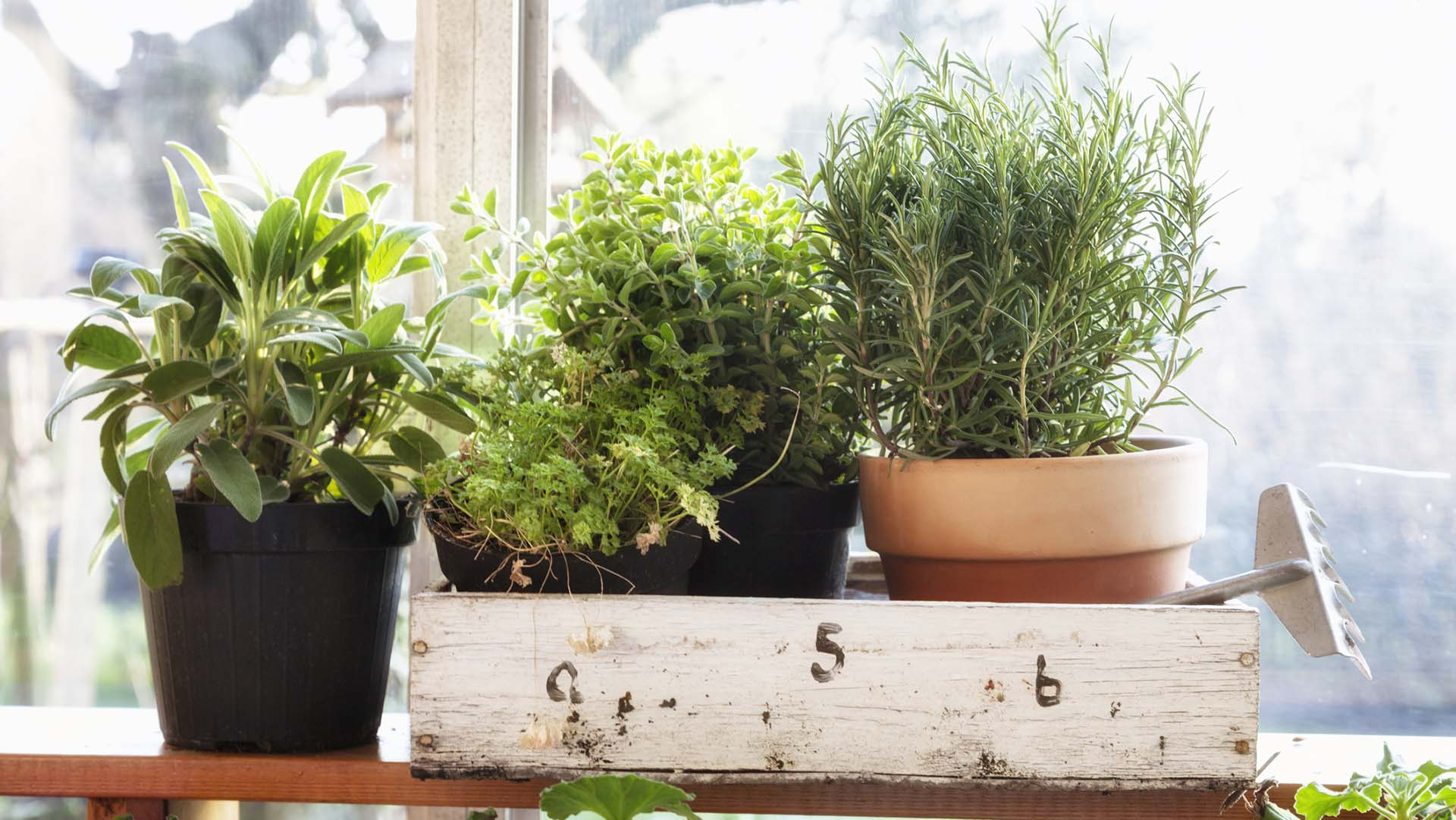 be_ how to grow herbs