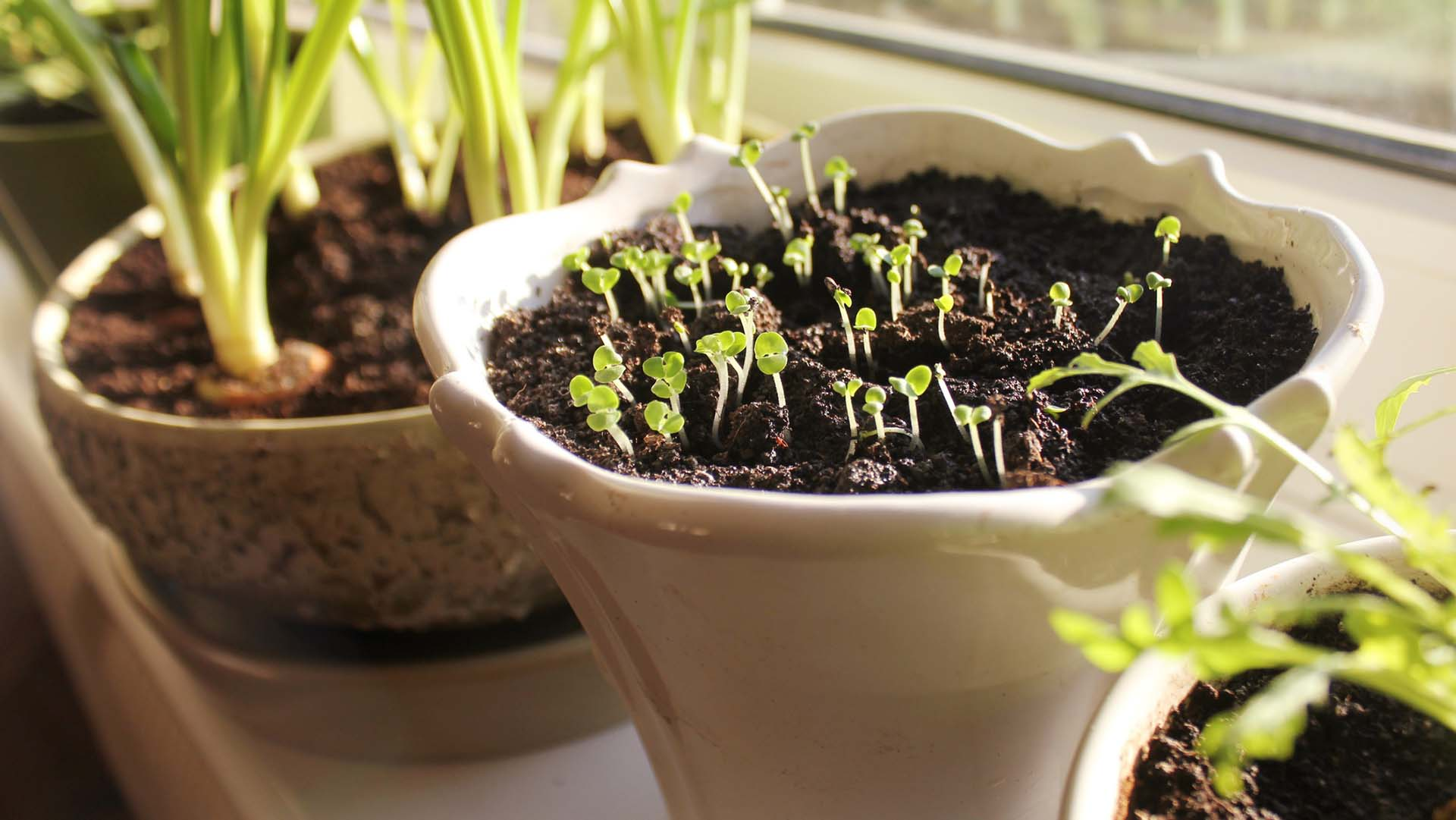 be_how to plant seedlings