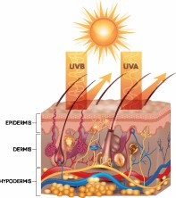 Broad spectrum sunscreen protects your skin from both UVA and UVB rays.