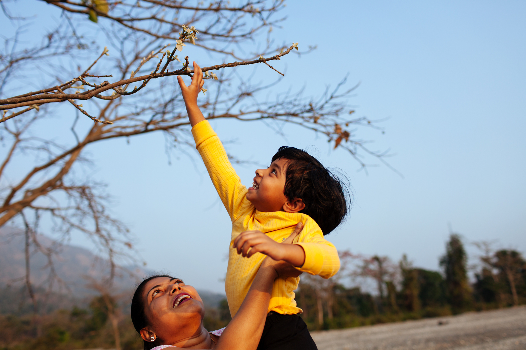 Child Reaching Up To Tree Branches From Her Mother's Lap